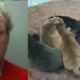 Man dumped newborn puppies in the trash