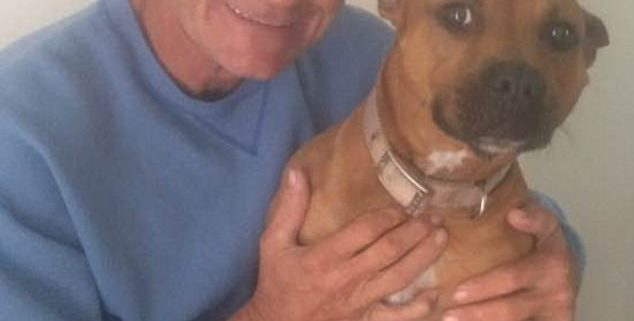 Man rushed into train's path to save dog