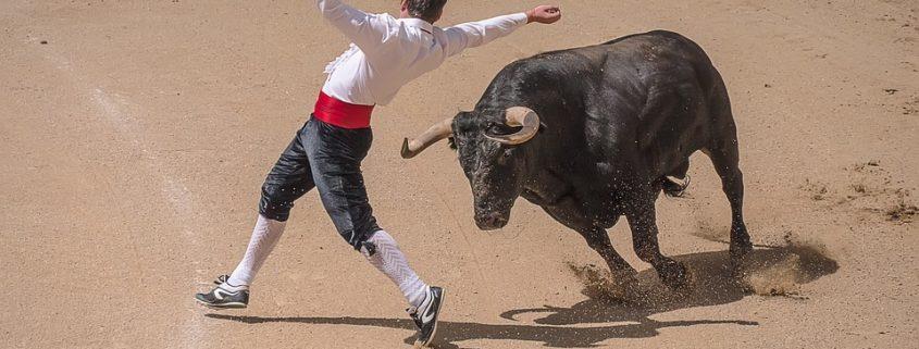 Matador injured by bull
