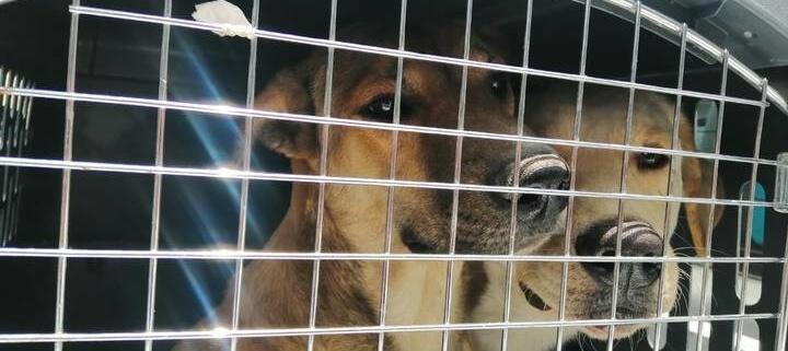 Mexican dog killer arrested