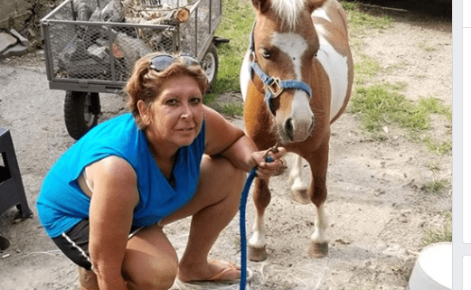 Miniature horse tortured