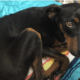 Miracle survivor beat death and needs a home