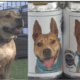 Missing dog found on beer can