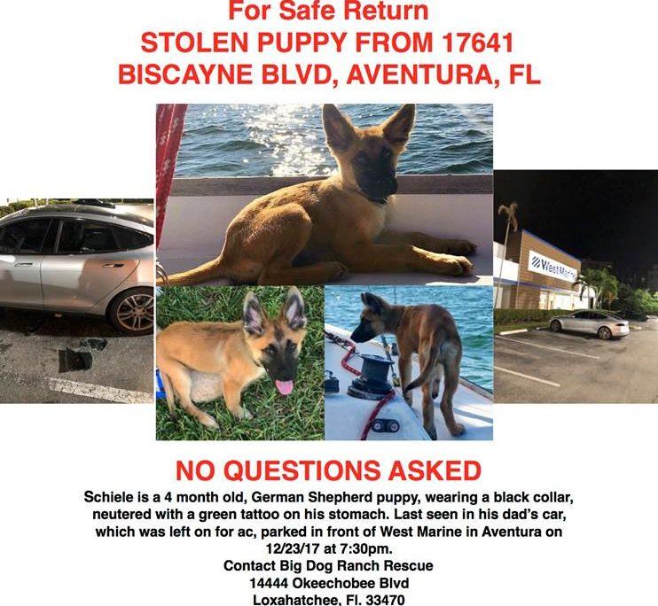 Missing puppy flier