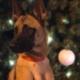 Missing military explosives detection dog