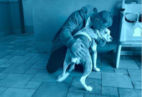 Missing therapy dog reunited with owner