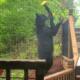 Mother bear killed