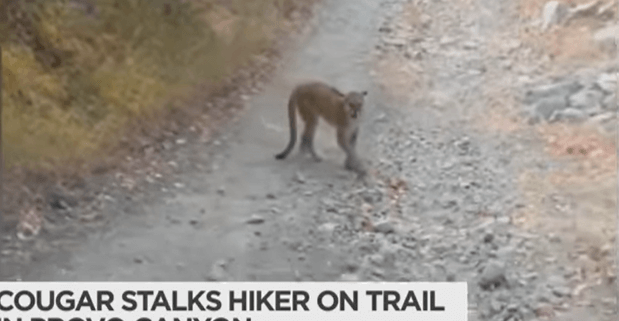 Mountain Lion encounter