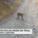 Mountain Lion encounter