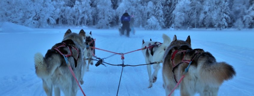 Musher withdraws from Iditarod after sled dog death