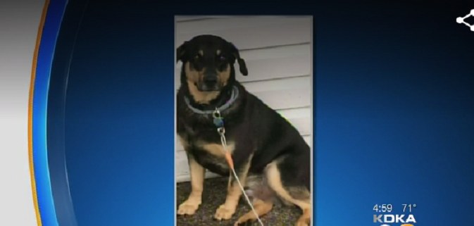 Pet-sitter muzzled a dog who died