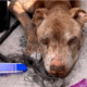 Neglected, ailing senior dog died