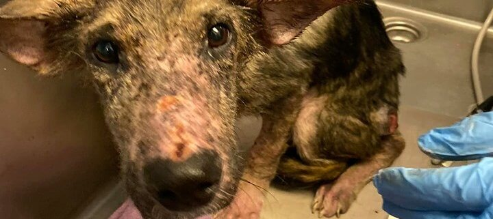 reward offered after discovery of emaciated dog