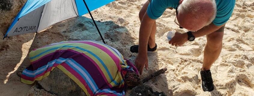 Nesting turtle bludgeoned