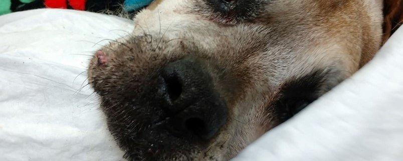 No happy reunion awaits ailing dog found in NY