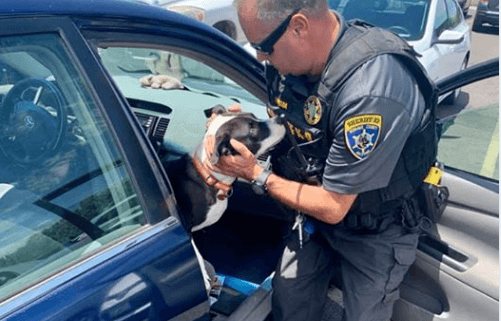 Officer rescues puppy from hot car