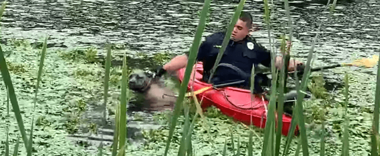 Officer rescues dog in water