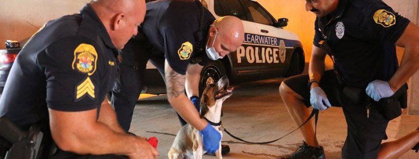 Officers rescued dog from hot car