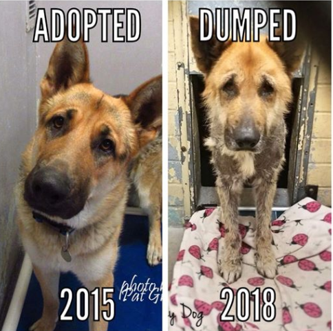 Old dog dumped in dismal condition