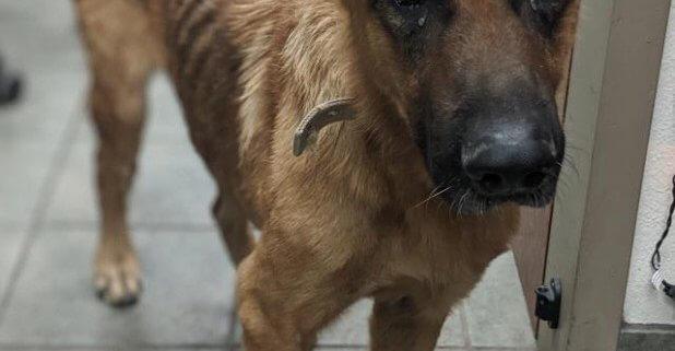 Senior dog needs TLC