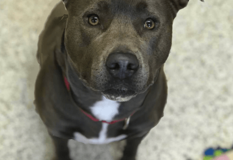 One lonely dog left at animal shelter
