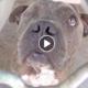 one-eyed homeless dog