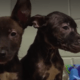 Mother dog and neglected puppies abandoned on mother's day