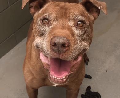 Overlooked senior dog getting stressed