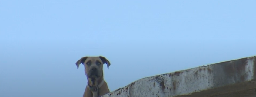 tragic update about dog on roof of factory