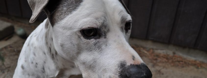 Animal welfare agency speaks out about rumors