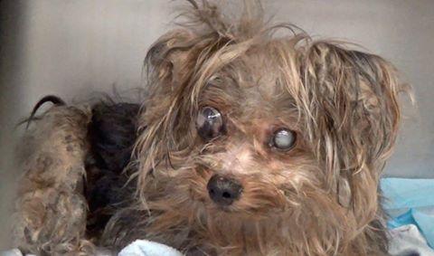 Pitifully neglected dog