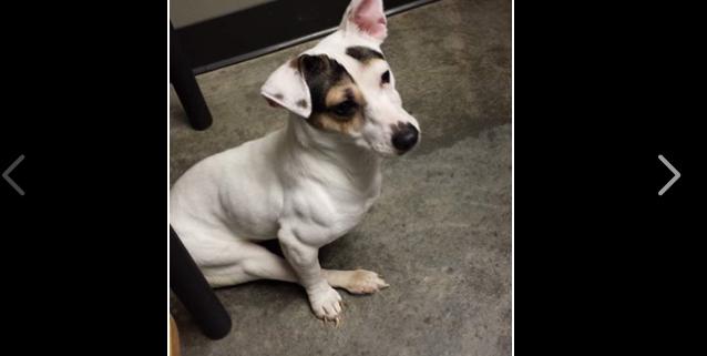 A plea for partially paralyzed dog