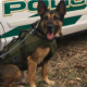 Police K9 unexpectedly died