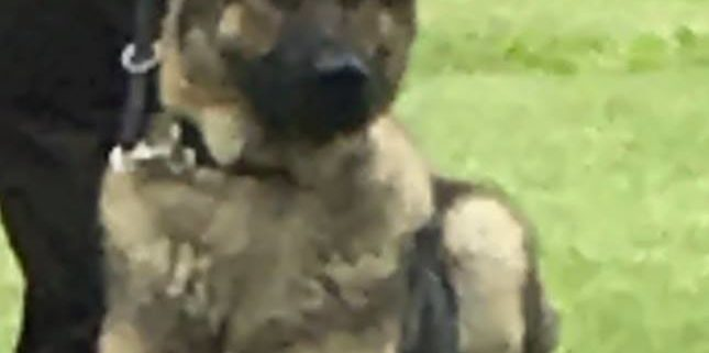 Police K9 killed in tragic accident