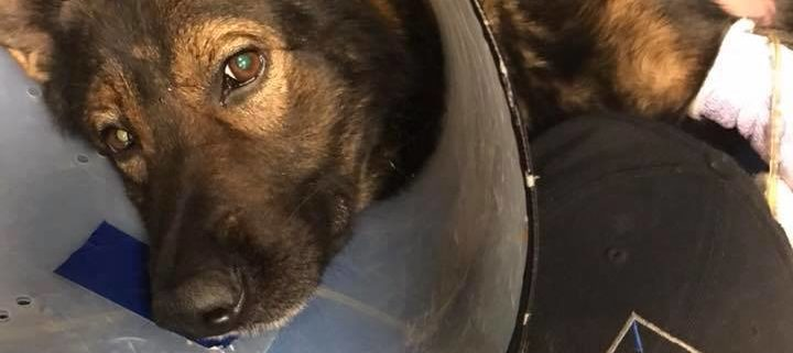 Police K9 died after falling from parking garage