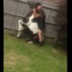 Man jumped on pony