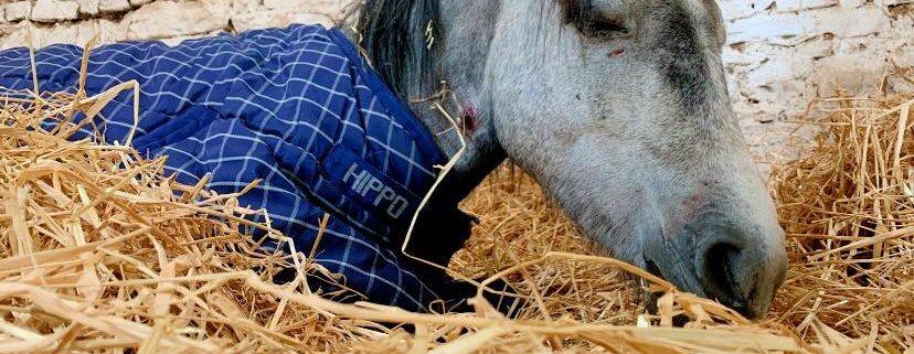 Pony dies after brutal beating by teens