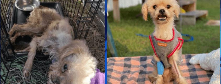 Reward offered after dog found in porta potty