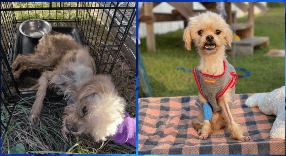 Reward Offered After Dying Dog Found Inside Of Porta Potty Pet Rescue Report