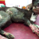 Puppy rescued after falling into boiling water