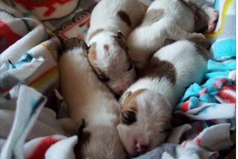 Abandoned puppies found in a dumpster