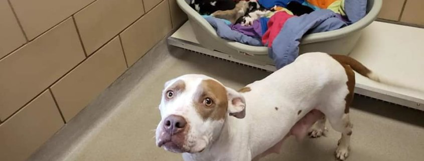 Puppies rescued, mother left behind at busy animal control agency