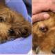 puppy beaten