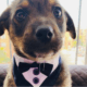 Puppy dressed up for adopters who never showed