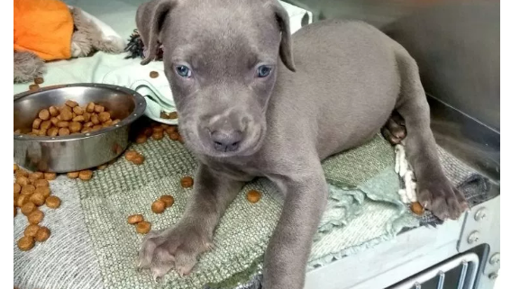 Puppy abandoned in box left at cemetery
