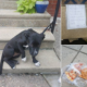 Puppy abandoned with note and pizza