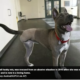 Puppy abuser sentenced
