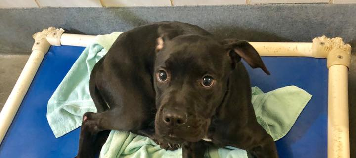 puppy adopted and returned