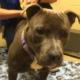 Puppy allegedly attacked in elevator