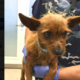 Dog attacked by coyote at risk of being euthanized